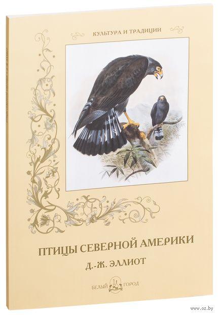 Птицы Северной Америки — фото, картинка
