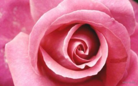 """Алмазная вышивка-мозаика """"Бутон розы"""""""