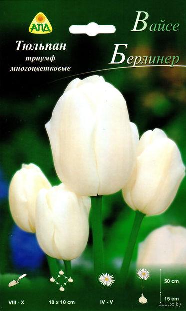 """Тюльпан триумф многоцветковый """"Вайсе Берлинер"""""""