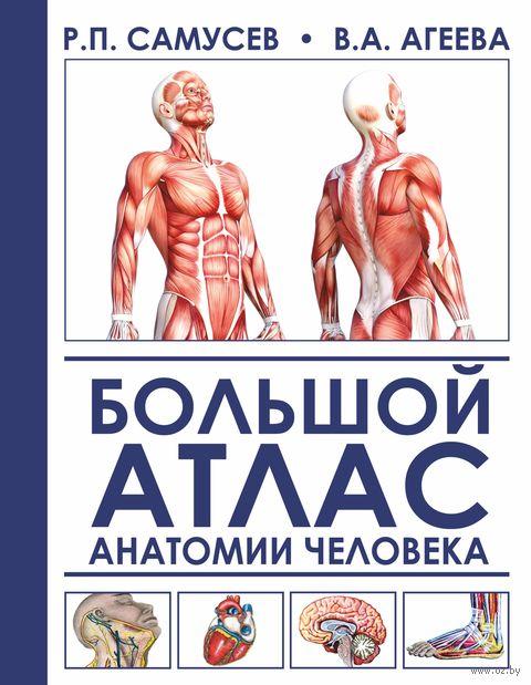 Большой атлас анатомии человека — фото, картинка