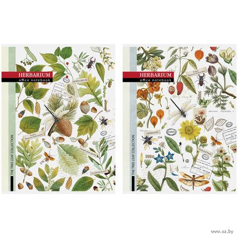 """Тетрадь общая в клетку """"Винтаж. Herbarium"""" (А4; 80 листов; в ассортименте)"""